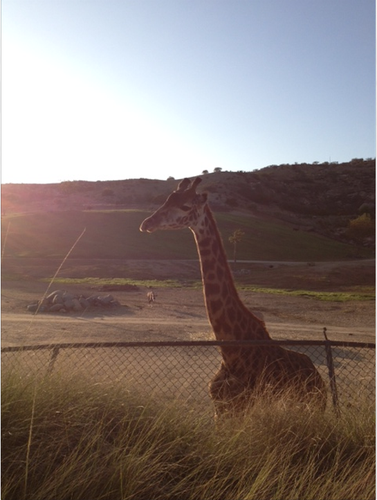 Giraffes were among the many sites to see at this year's summer party.